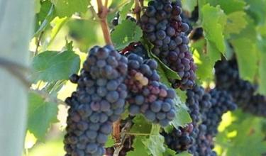 Wine Leaders Forum